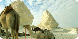 Egypt Safari & Adventure Packages